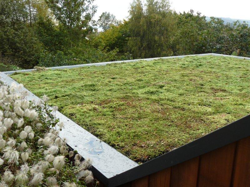 Brown Amp Green Roofs Building Devon