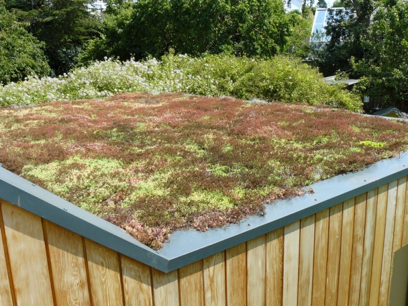 Brown Amp Green Roofs Building Devon