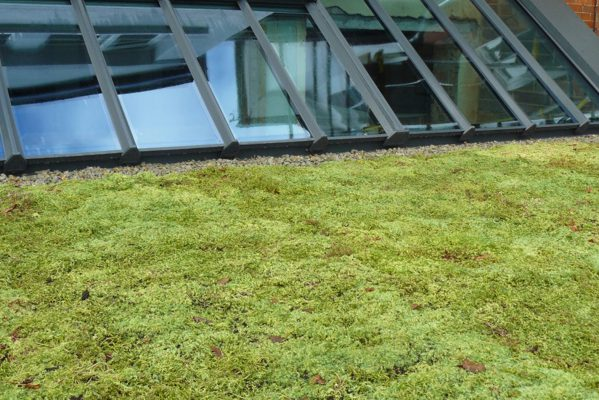 Brown & Green Roofs